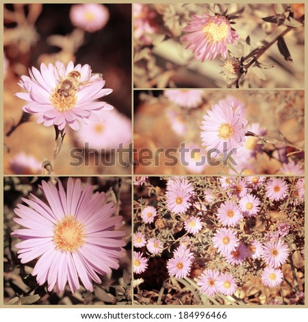 Vintage collage of autumn asters. Art floral background with paper texture overlay. Retro style. - stock photo
