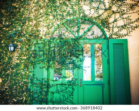 vintage Creeper Plant on a green beautiful door for Background