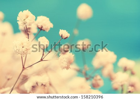 vintage cute small white flowers close up - stock photo