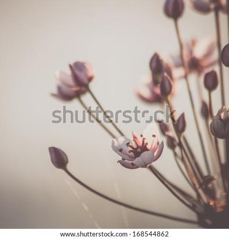 Vintage delicate flowers - stock photo