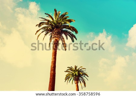 Vintage Filtered Photo with Palm trees at tropical coast in old-fashioned style