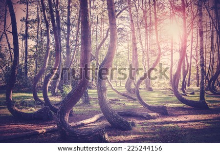 Vintage filtered picture of sunset at mysterious forest. - stock photo