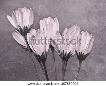 vintage flower - stock photo