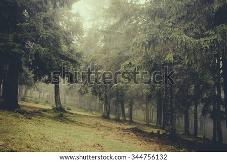 vintage foggy  forest background - stock photo