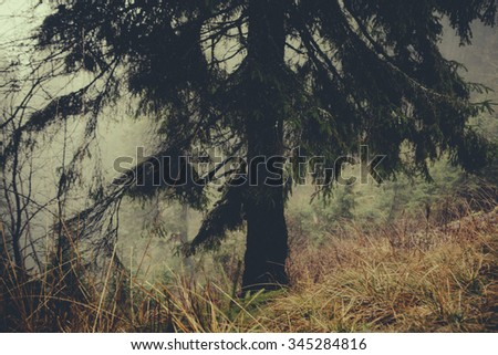 vintage foggy  forest background