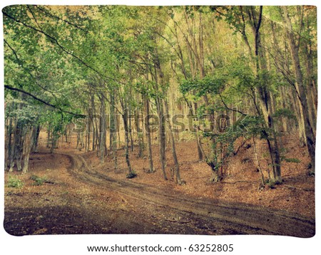 Vintage forest - photo card - stock photo