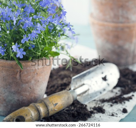 Vintage garden tools and blue flowers in terracotta flower pots - concept for gardening - stock photo