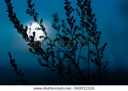Vintage grass background with moon - stock photo