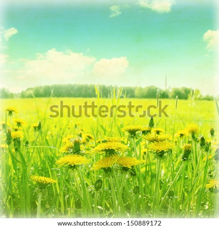 Vintage image of dandelion field in morning time. - stock photo