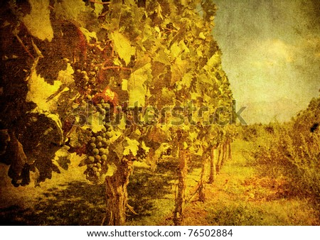 vintage image of grape - stock photo