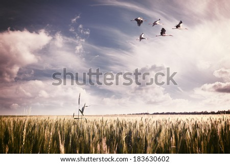 Vintage landscape a summer wheat field with a flock of storks - stock photo