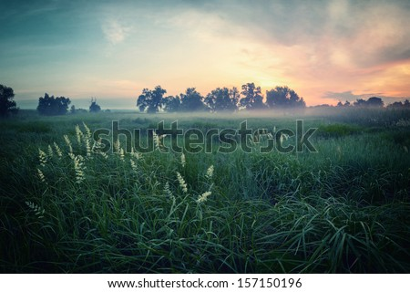 Vintage landscape of gentle spring morning with high green herbs on a meadow - stock photo