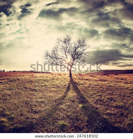 Vintage landscape with a lone tree in a field on a hill - stock photo