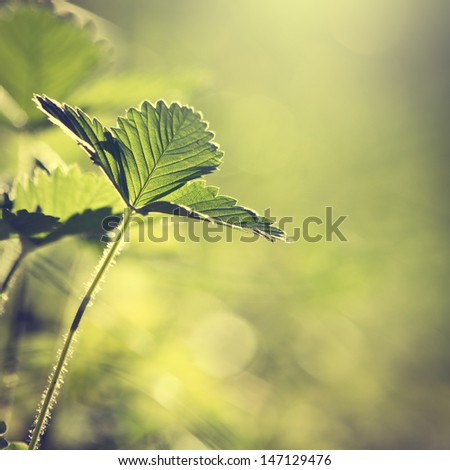 Vintage leaves in forest - stock photo