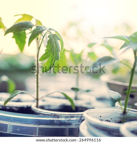 vintage little young green plants in plastic boxes at home - stock photo