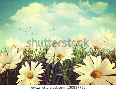 Vintage look of summer daisies in grass - stock photo
