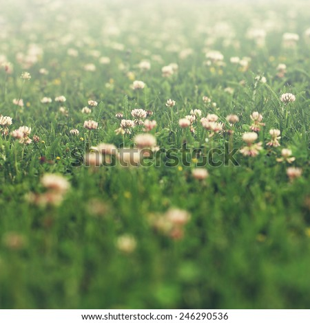 vintage meadow flowers on green grass background. Spring sunny photo - stock photo