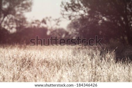 Vintage Morning Dew In Grass - stock photo