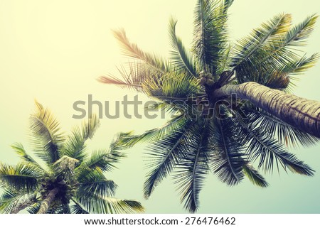 Vintage nature background of coconut palm tree on tropical beach blue sky with sunlight of morning in summer,  instagram filter  - stock photo