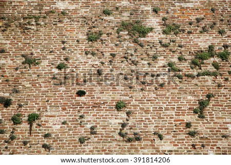 Vintage Old red brick wall with vegetation green grass copy space - stock photo