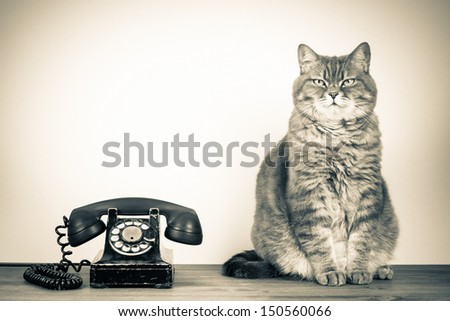 Vintage old rotary telephone and British cat on table sepia photo - stock photo