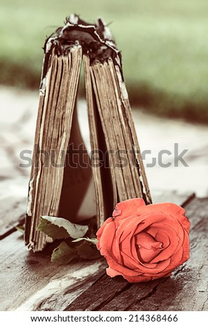 vintage open book on wood desk with red rose - stock photo