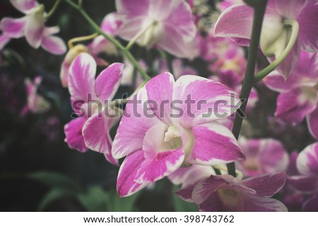 Vintage orchid flowers - stock photo