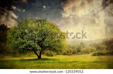 vintage pastoral landscape with single tree - stock photo
