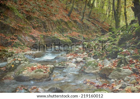 Vintage photo of an autumn forest and water stream