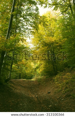 Vintage photo of autumn forest - stock photo