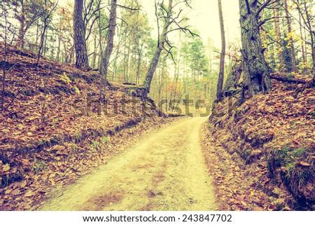 Vintage photo of autumn forest landscape - stock photo