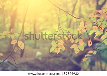 Vintage photo of autumn leaves - stock photo