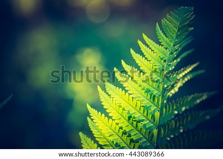Vintage photo of beautiful fern leaves growing in forest. Natural background - stock photo