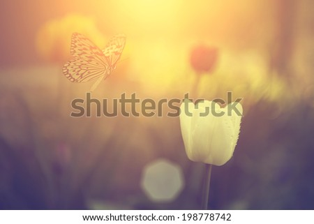 Vintage photo of butterfly and tulip flower - stock photo