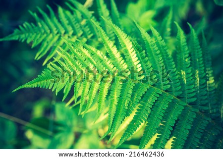 vintage photo of fern leaves - stock photo