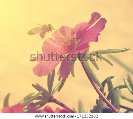 Vintage photo of flower and bee - stock photo