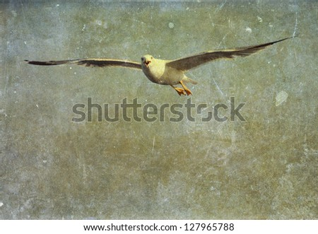 Vintage photo of flying seagull