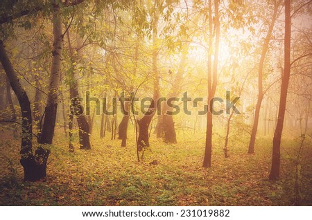 Vintage photo of forest at sunset