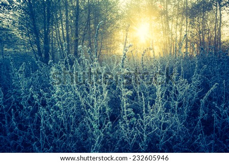 vintage photo of frosty landscape with sunbeams - stock photo
