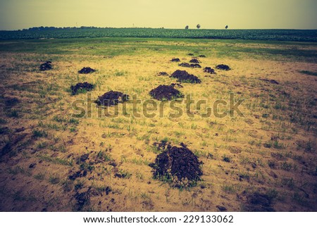 vintage photo of landscape with molehills - stock photo