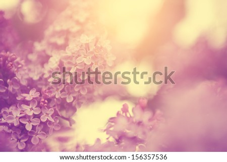Vintage photo of lilac bush in sunset - stock photo