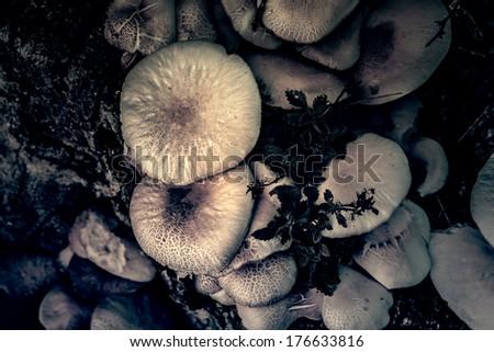Vintage photo of mushrooms - stock photo