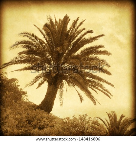 Vintage photo of palm tree at sunset on the hill.  - stock photo