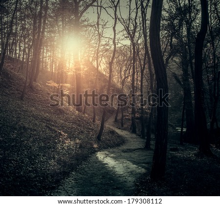 Vintage photo of path in forest - stock photo