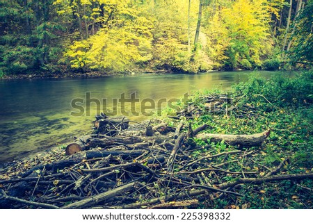 vintage photo of river in forest