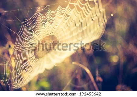 vintage photo of spider web  - stock photo