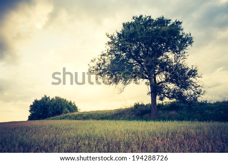 vintage photo of storm clouds over stubble field and tree - stock photo