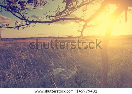 Vintage photo of sunset - stock photo