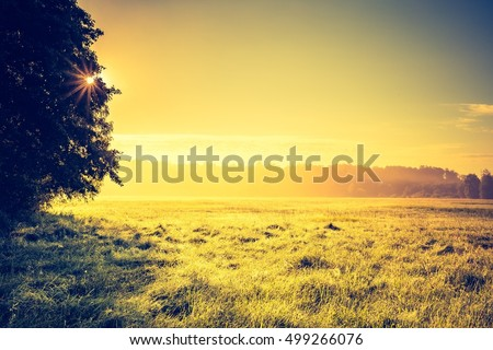 Vintage photo of vibrant landscape with foggy meadow in Poland. Countryside with wild foggy meadow.
