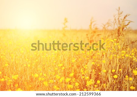 Vintage photo of yellow flower field on a sunny day - stock photo